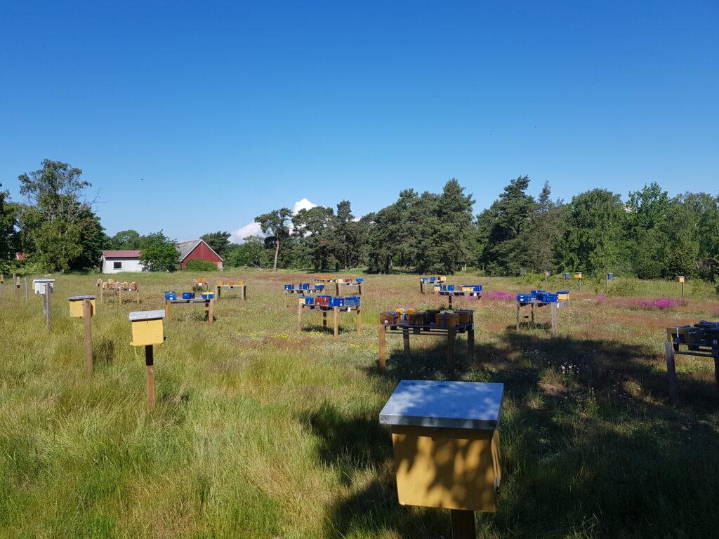 Bilden visar ett större område av parningsstationen.